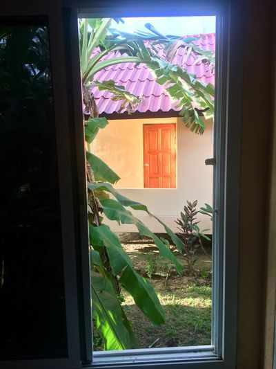 Window Glass - Material Built Structure Door No People House Architecture Nature Plant Day Looking Through Window