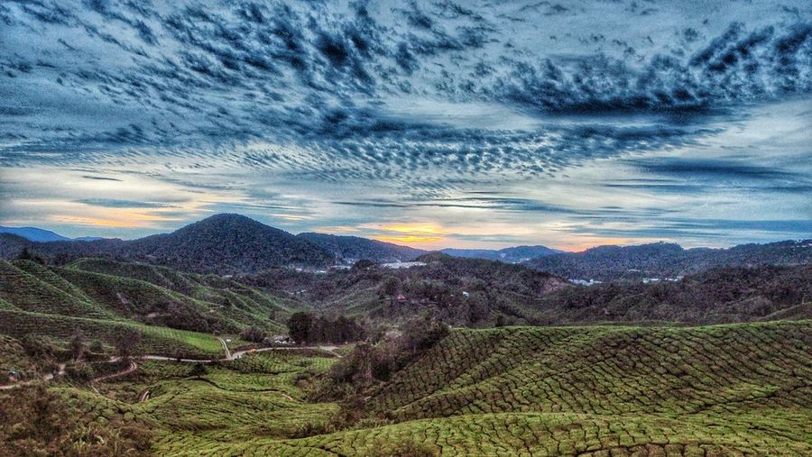 Agriculture Cultivated Land Field Beauty In Nature Rural Scene Farm Scenics Tea Crop Outdoors Mountain Nature
