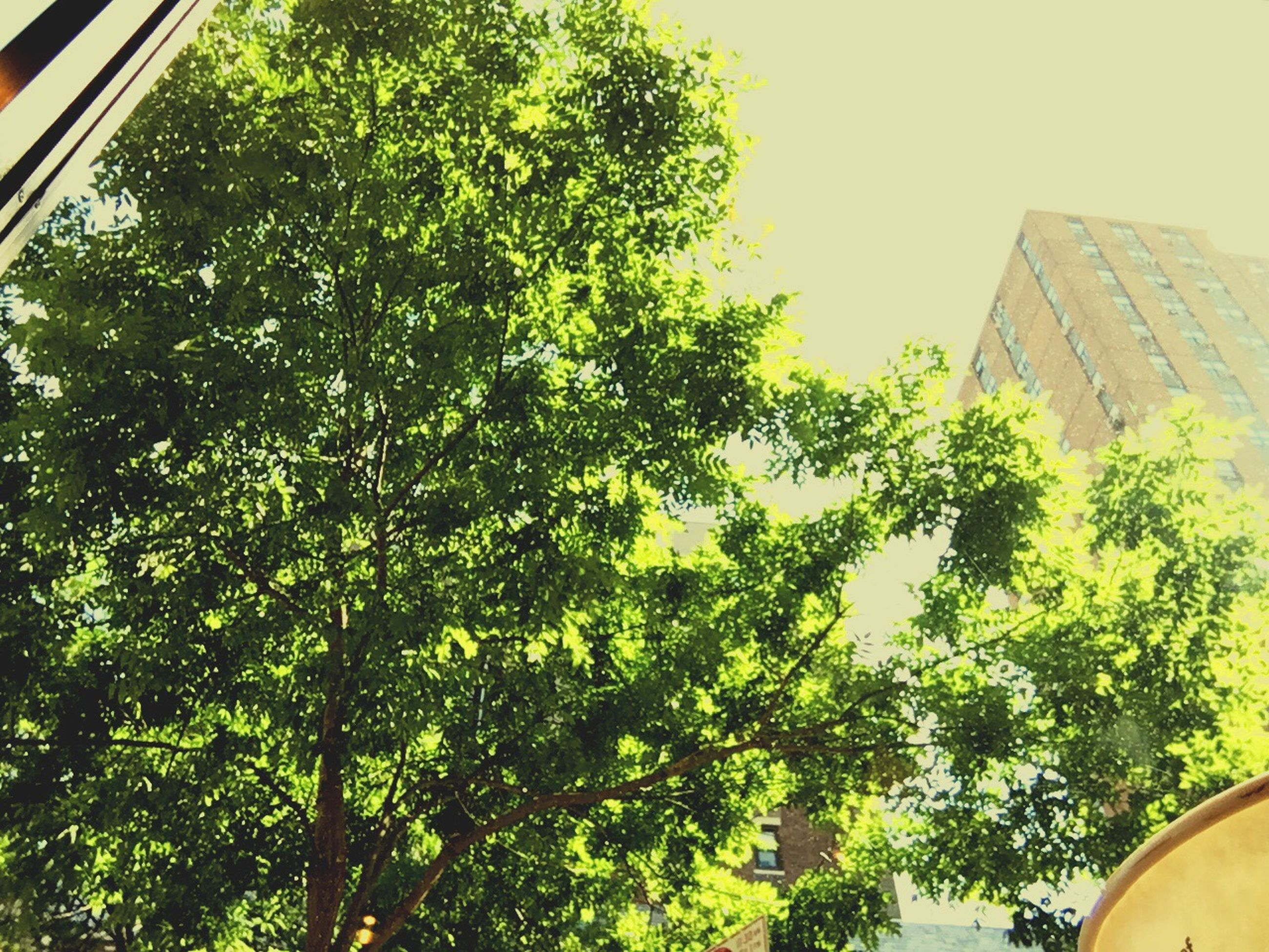 architecture, building exterior, built structure, tree, low angle view, growth, building, green color, clear sky, house, day, residential building, residential structure, window, outdoors, no people, branch, plant, leaf, sunlight