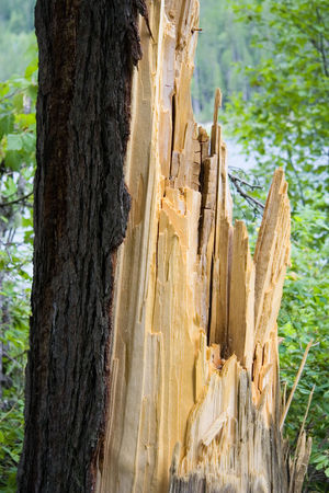 giant tree strucked by lightning - damage to forests British Columbia Canada Close-up Damaged Deforestation Environment Forest Forestry Industry Log Lumber Industry Nature No People Old Old Tree Outdoors Snag Timber Tree Tree Stump Tree Trunk Waldsterben Wood Wood - Material WoodLand Woods