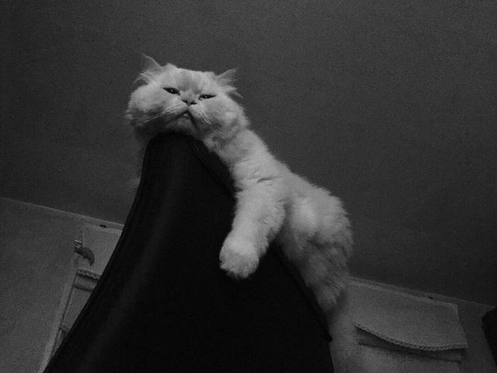Always Be Cozy Hellow Heema Cat