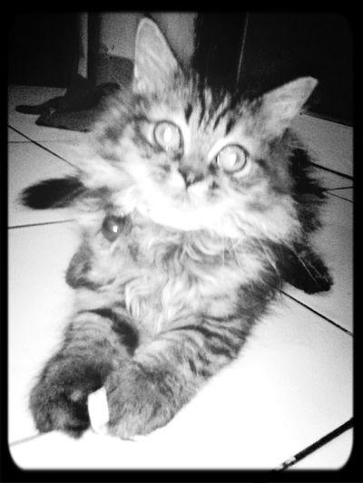 Jenny my cat