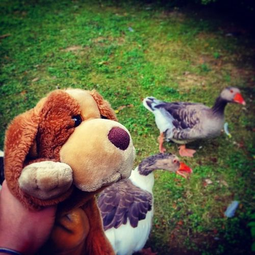 With some hissing Geese :D Puppy Puppyontour Animals museum birds grass stuffedanimals dog picoftheday epic hipster cool hamburg germany travel vacation summer friends love swag party fun yolo omg adorable cute instaanimals instabest instamood