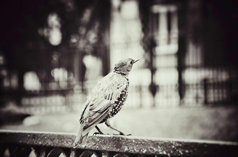 Monochrome Photography , Birds Moscow City Sedness