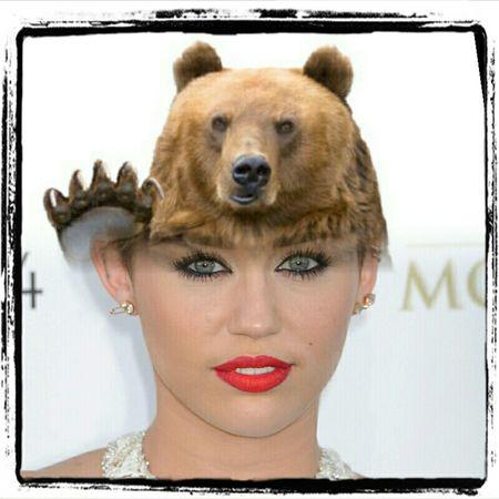 Orso Miley Cirus Washington Guadalajara Lithuania Poland Malaysia Peru Argentina #