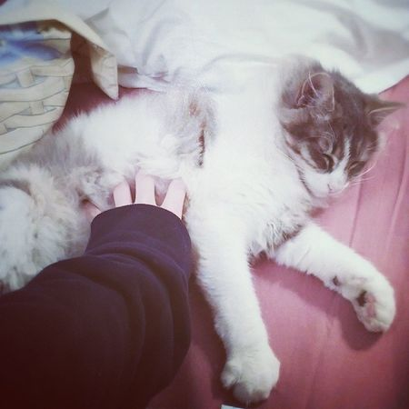 Ronronron ?? Cat Catlover Catstagram Miaou cute calin hug chat grisou inuit dodo ronron choupi