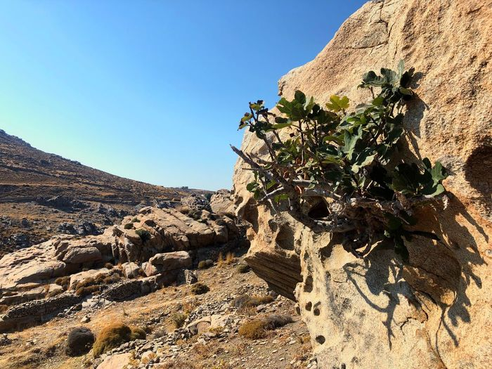 Plant growing on rock against sky