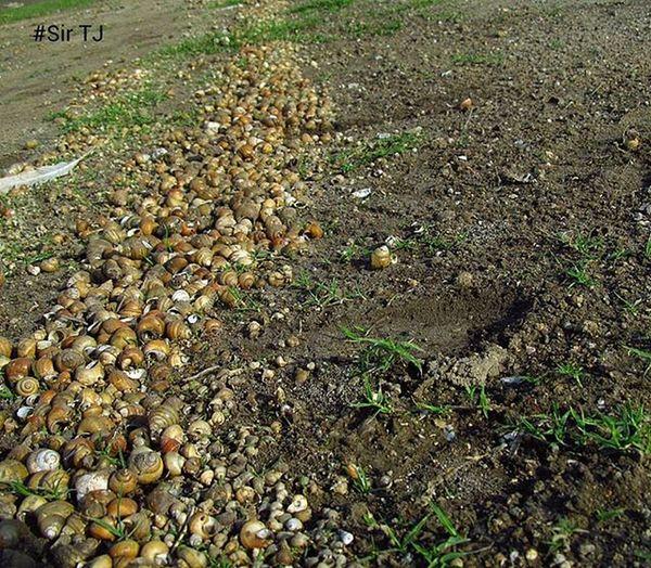 Way_to_snail_kingdom Canon_poweshot_sx150_is Bhigwan_bird_sanctuary