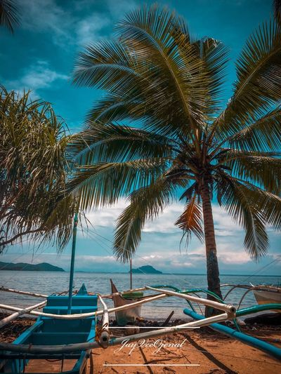 Road trip to busuanga Tree Water Palm Tree Sea Plant Tropical Climate The Great Outdoors - 2018 EyeEm Awards Transportation No People Day Scenics - Nature Nautical Vessel Land Tranquil Scene Beauty In Nature Tranquility Beach Outdoors Nature Sky Sand