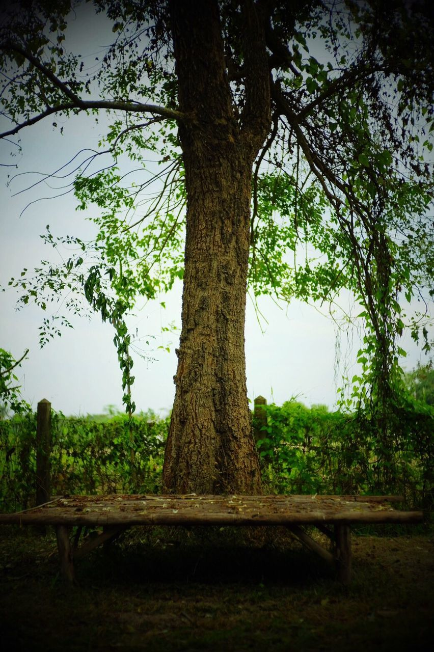 tree, tree trunk, growth, nature, no people, outdoors, beauty in nature, branch, day, sky