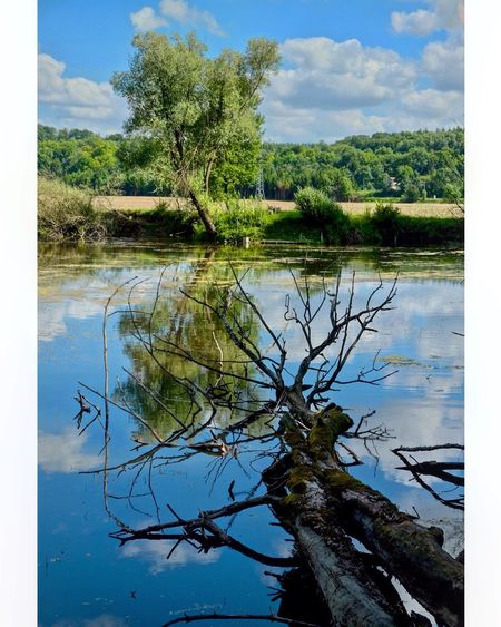 EyeEmNewHere Tree Nature Water Sky Lake Reflection Landscape France Meuse Lorraine Beauty In Nature Fujifilm Fujifilm_xseries FUJIFILM X-T10