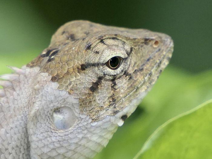 Animal Reptile