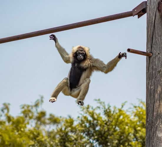 Low angle view of monkey flying against sky