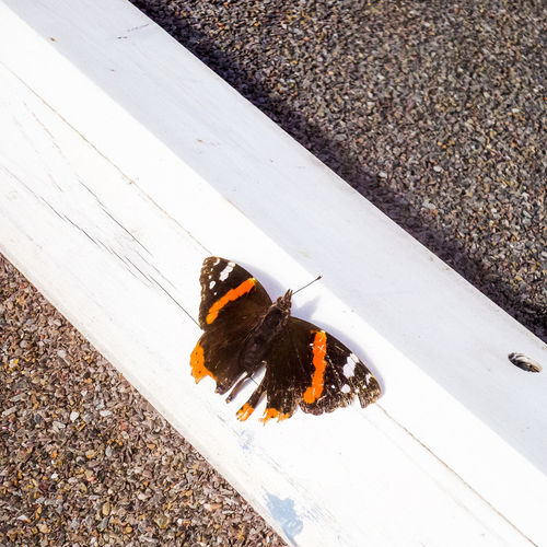 Butterfly Animal_collection EyeEm Nature Lover