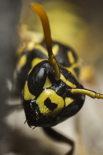 Macro shot of wasp