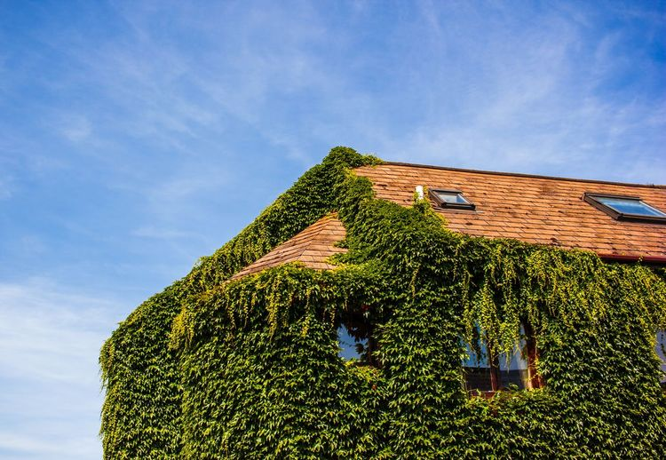 somewhere in Cambridge, summer 2017 Overgrown Rural Scene Agriculture Sky Architecture Close-up Residential Structure Tranquility Growing Idyllic Roof Tile