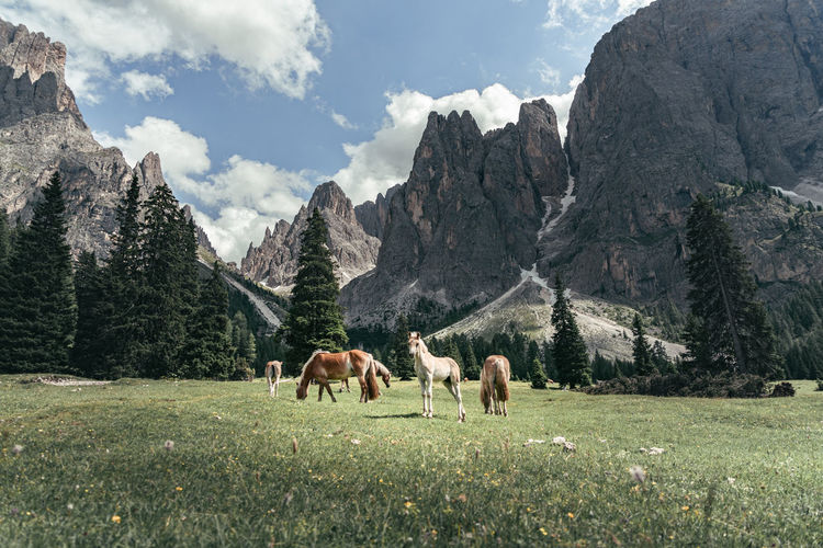 Horses grazing against mountains