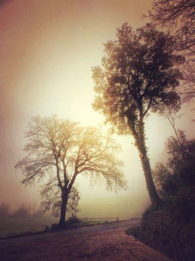 EyeEm Best Shots - Landscape IPhoneography AMPt_community EyeEmBestPics
