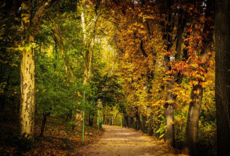 Alley Autumn Autumn Colors Landscape Landscape_Collection Nature Outdoors Park Tree Trees