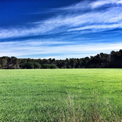 """The heavier crop is always in other's fields"" - Ovid ____________ ""El cultiu mes pesat sempre creix en camps aliens"" - Ovidi ____ Pantone Colors By GIZMON EyeEm Best Shots - Nature Landscape Somosfelices"