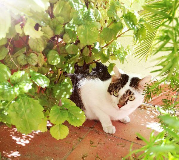 Cat Nature Catnature Leaf Spring
