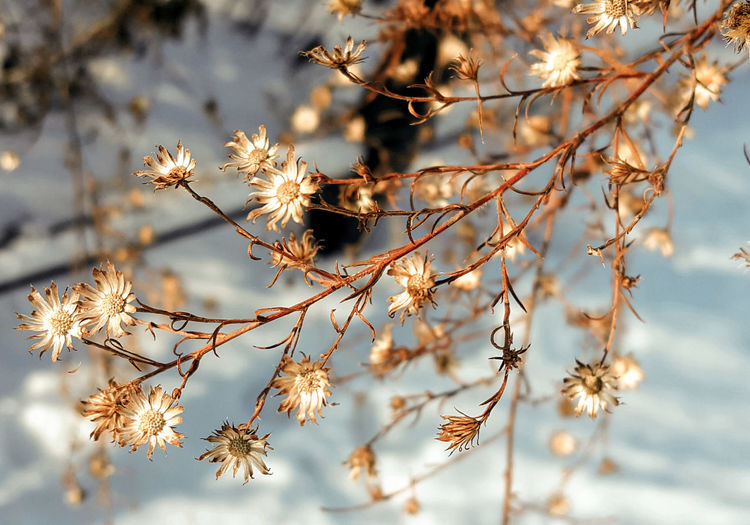 Nature Close-up Beauty In Nature Growth Plant No People Sunlight Outdoors Tranquility Day Fragility Snow ❄ Wintertime Winter Flower Flowers