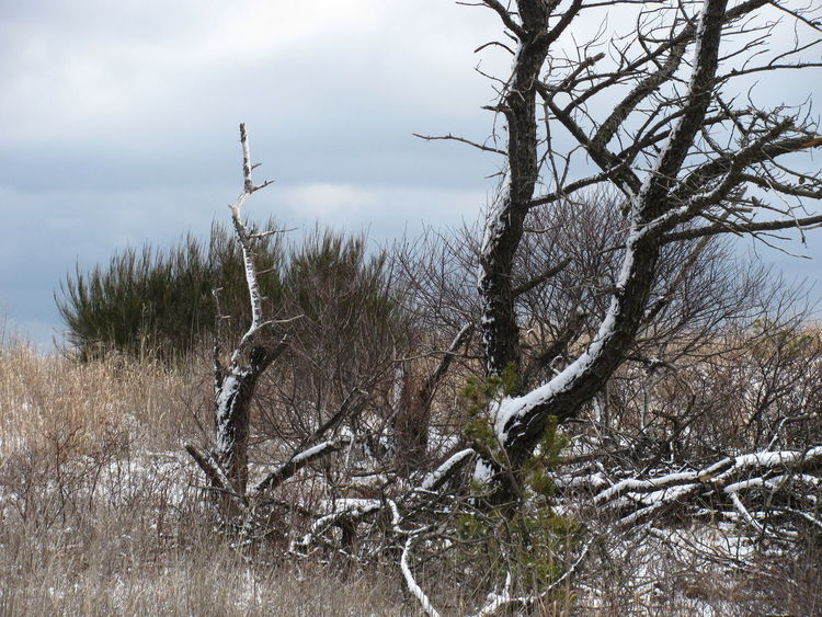Tree Dead Tree Beach Landscape_Collection Landscape Winter Winter Trees Winter Tree