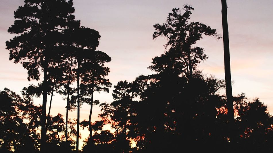 Tree Perspectives On Nature Silhouette Sunset Nature Sky No People Outdoors Beauty In Nature Forest Scenics Nature Photography United States Houston Texas Texas Nature_collection Closeup In Nature Tree EyeEmNewHere