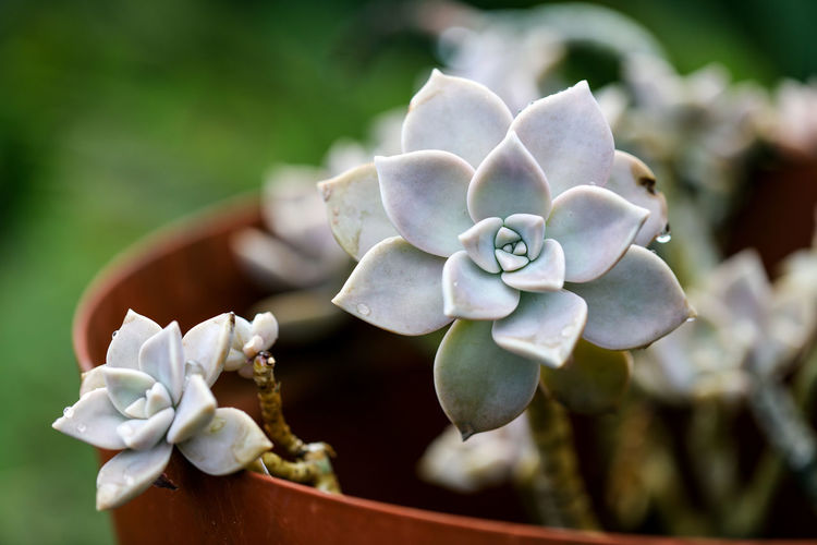 Close-up of succulent plant outdoors