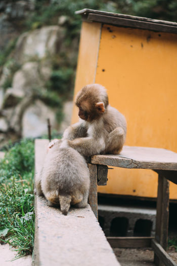 Monkeys sitting on stone wall