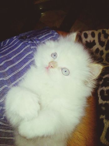 i love you my cat ((mesho))♥♥♥
