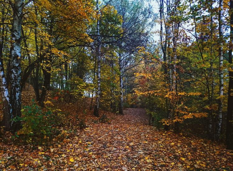 #autumn #eyembestshot #eyemnaturelover #forest #rsa_nature #sony #vscocam #vsco #xperia