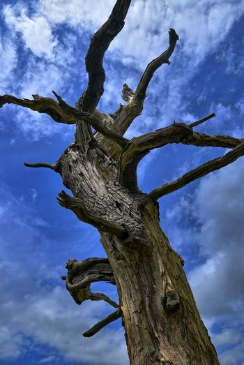 Low angle view of tree trunk against blue sky