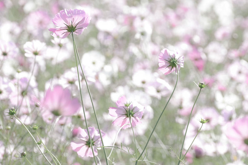 Close-Up Of Purple Wildflowers