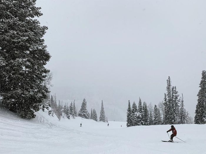 storm skiing. Utah Deer Valley Utah Wasatch Mountains Snow Winter Cold Temperature Tree Plant Winter Sport Leisure Activity