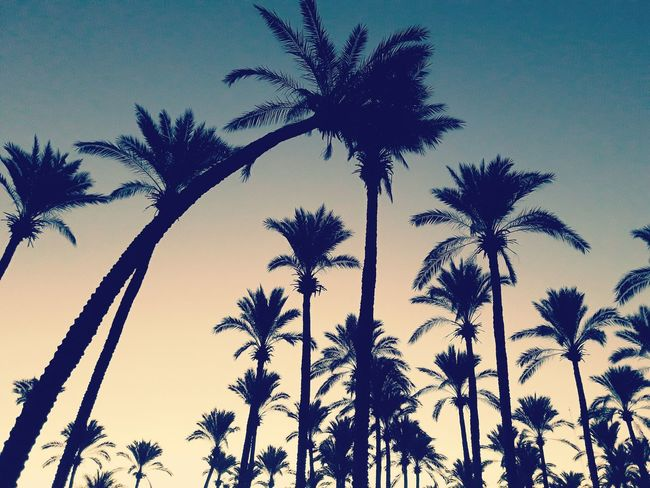 Palm Tree Tree Low Angle View Growth Nature Silhouette No People Tranquility Outdoors Day Sky Treetop Backgrounds Leaf People Adult Human Hand Sea Life Real People Claw Holding One Person Human Body Part First Eyeem Photo Reptile