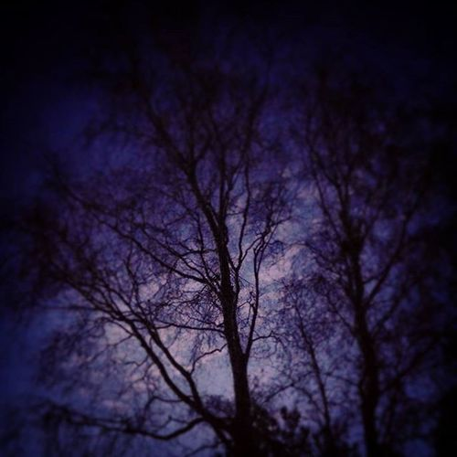""""""" Twilight Trees """" Twilight Dusk Trees Treesofinstagram Halloween Spookytime Bicclescombepark Ilfracombe Nightshot Blue Purple Shadows"""