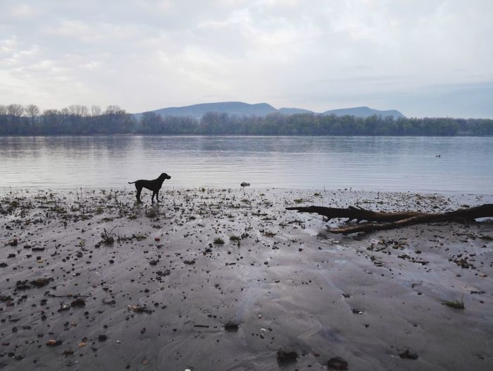 Morning walk with my dog Dog❤ Danube River Landscape With Dog