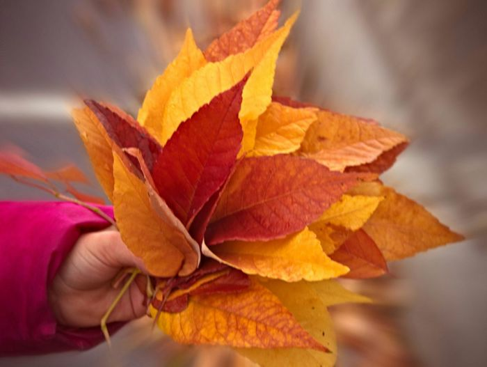 Cropped Image Of Person Holding Autumn Leaves