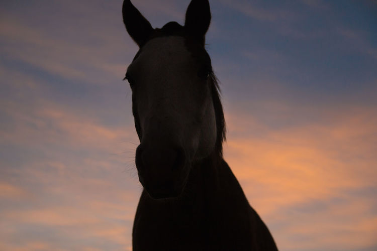 Silhouette of horse against sky during sunset