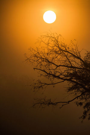Bare Tree Beauty In Nature Branch Circle Eclipse Fog Idyllic Moon Nature No People Orange Color Outdoors Planetary Moon Plant Scenics - Nature Silhouette Sky Sun Sunset Tranquil Scene Tranquility Tree