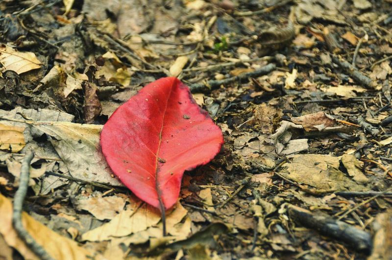 Leaf Nature Change Autumn Close-up Outdoors Beauty In Nature No People Fallen Day Fall Leaves Fall Colors Fall Beauty Fall