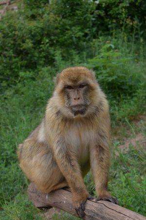 Zoophotography Zoo Animals  Erfurt Mai2016 Animal Monkey Lumix DMC-LX100 Panasonic DMC FZ1000
