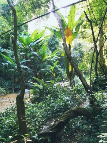 jungle outing   from the jungle series 2015 Beauty In Nature Day Forest Freshness Gowiththeflow Green Color Growth Jungle Light Mindfulness Nature No People River Sacred Geometry Sunlight Tree Trunk Wildlife Wildriver