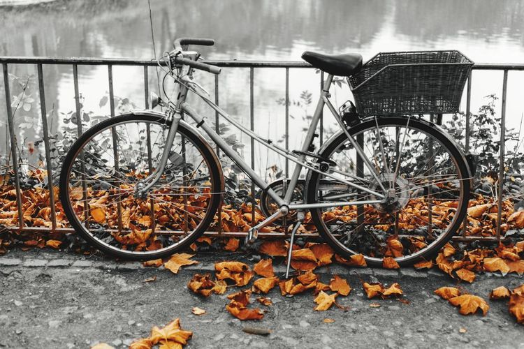 autumn mood Autumn Autumn colors Autumn Leaves Urban Bicycle Urban Lake Bicycle Bicycle Stationary City Land Vehicle Metal Parking Abandoned Old Fall