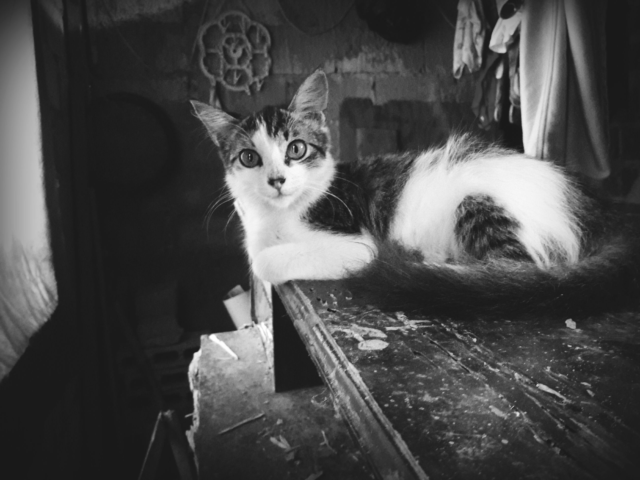 domestic animals, pets, indoors, mammal, animal themes, one animal, domestic cat, cat, dog, feline, home interior, looking at camera, high angle view, portrait, relaxation, no people, sitting, house, front view, day