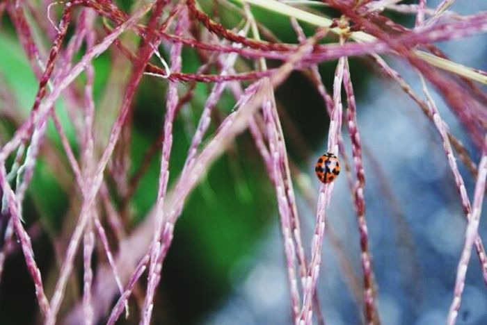 How's The Weather Today? Hugging A Tree Nature_collection Stand Out From The Crowd Creatures Ladybug Depth Of Field Urben Wildlife EyeEm Nature Lover Micro Nature