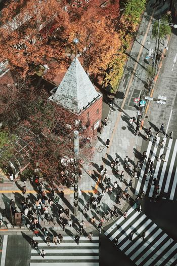 Autumn Leaves Cityscape Tokyo Tokyo Street Photography Architecture Building Building Exterior Built Structure Change City Crowd Day Group Of People High Angle View Incidental People Large Group Of People Nature Outdoors Plant Real People Road Sign Street Tree Walking The Architect - 2018 EyeEm Awards
