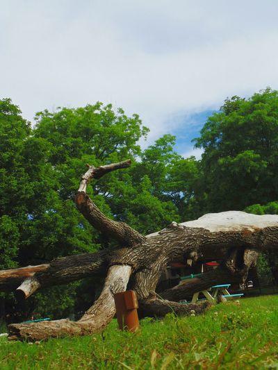 Lazy tree Tree