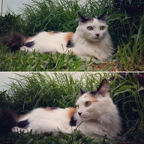 Caturday Relaxing Funpetlove Lovemycat Catsofinstagram Animalslovers Instacat Green Catstagram Kitty Petstagram Pets_of_instagram Picpets Animalsofinstagram